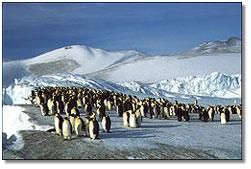 penguinsicebergblockade.png