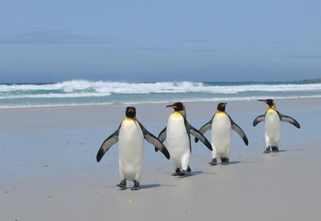 penguinsbeachjoankoele.jpg