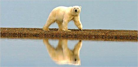 polarbear600.jpg