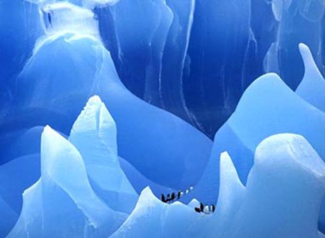 antarcticapenguinsicebergcorbis.jpg